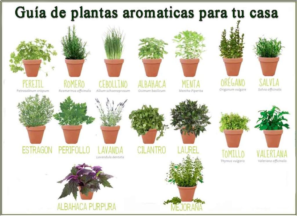 Hierbas aromaticas para cocinar - Plantas aromaticas en la cocina ...